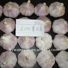 Jinxiang frozen garlic