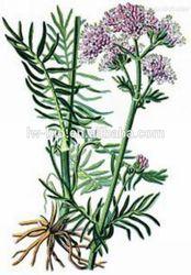 Valerian root extract, Valerianae extract, 0.4%, 0.8% Valeric Acid, latin name Valeriana officinalis L. CAS