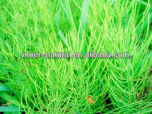 Horsetail Extract/Equisetum Arvense L. p.e. 7% Organic Silicon