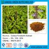 Organic Natural Coleus Forskohlii Extract/Forskohlin