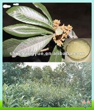fine powder ursolic acid Loquat Leaf Extract
