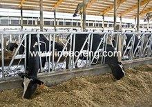 cattle headlock dairy headlocks IN-M159
