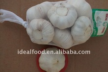 new crop fresh garlic for wholesale