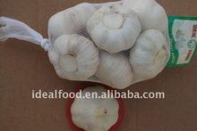 new crop fresh garlic for wholesale