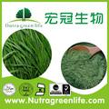 Fabricante fornecer jovens cevada grama p. E o/suco de cevada pó