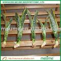 Ornamentais de interior plantas de folhagem