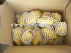 new crop China holland fresh potato 150-200g