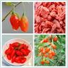Ningxia goji berry for health product, dried goji fruit