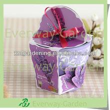 Flower Plant Kit