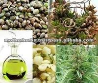 100% Pure Cold Pressed Hemp Seed Essential Oil