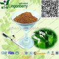 Usp/ep/cp ginkgo biloba folhas/de água- solúvel ginkgo biloba extrato de folha de pó
