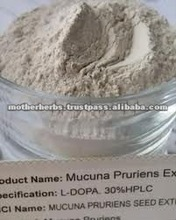 Mucuna Pruriens Extract Powder Tonic for increasing sexual potency