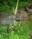 Black Cohosh Extract Powder10:1