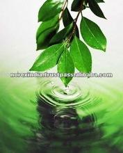 (Leaf Alcohol) Best Cis 3 Hexanol