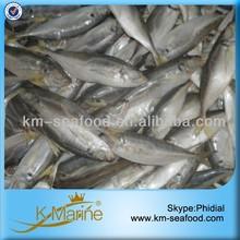 Frozen Seafood Horse Mackerel Fish Sale