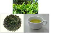 High quality Oolong New 2014