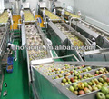 Fruits and vegetables drying line