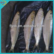 Price frozen sardines fish