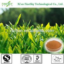 high quality green tea extract 98% polyphenols powder