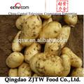 di patate fresche importatori a dubai prezzo di patate fresche