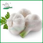 China fresh garlic/Natural garlic/Garlic market price