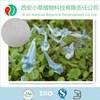 natural corydalis yanhusuo extract tetrahydropalmatine