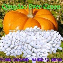 new crop chinese snow white pumpkin seeds