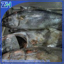 Frozen yellowfin tuna Whole Round
