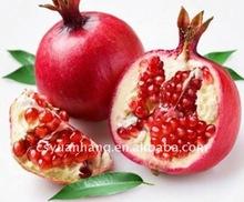Pomegranate Hull P.E.