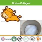 Nutraceutical HALAL hydrolyzed bovine collagen
