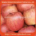 shandong 2014 fuji rojo de apple