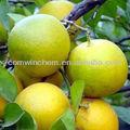 synephrine، 94-07-5( 582-- 84-- 3)، citurs aurantium