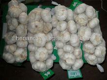 2014 China shandong natural fresh garlic