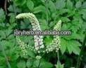 Black Cohosh Extract Powder 2.5% Triterpenoid Saponins