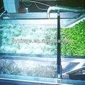 Vegetales y frutas de lavado/limpieza de la línea de la máquina
