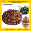 Professional GMP Factory Provide Natural Grape Seed Extract Powder