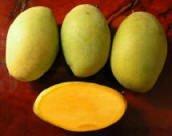 Sell Fresh Fruits Mango