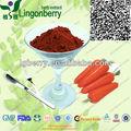 Negro zanahoria extracto de polvo para GMP orgánico HACCP ISO KOSHER HALAL