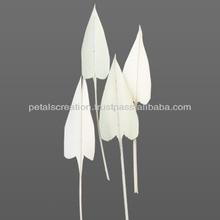 Palm- Arrow- Leaves