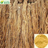 angelica root extract/Angelica Sinensis P.E ligustilide 1%