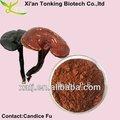 Naturale puro organico ganoderma lucido estratto in polvere- 20% ganoderan uv