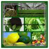 Humic Acid NPK fertilizer