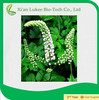 Black cohosh root powder/natural black cohosh extract/black cohosh p.e.