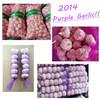 2014 New Red Garlic in China, Purple Garlic Supplier/Exporter