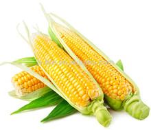 sweet corn flavors food flavor
