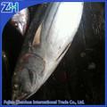 Import export de gros poissons fruits de mer congelés listao rond entier, fruits de mer congelés listao prix