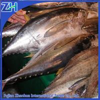 sell seafood whole tuna fish wholesale/ fresh frozen yellowfin tuna price