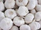 fresh garlic 2013