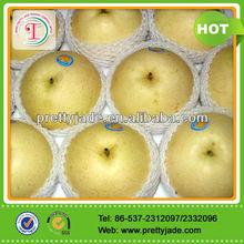 new chinese fresh ya pear