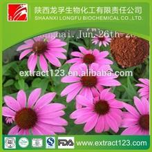 organic echinacea flower extract echinacea extract echinacea standardized extract